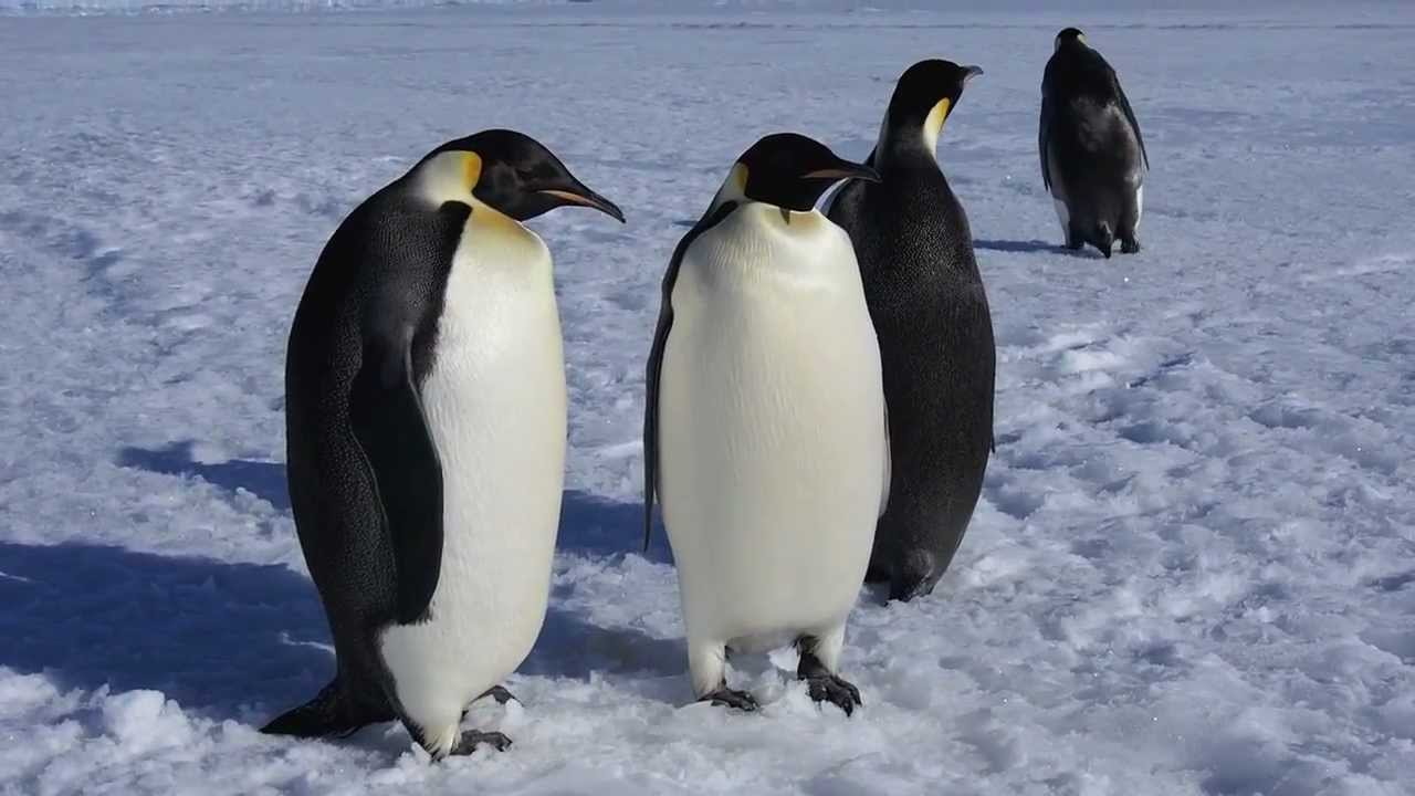 , Penguin, seal waste contributes to biodiversity in Antarctica: Study