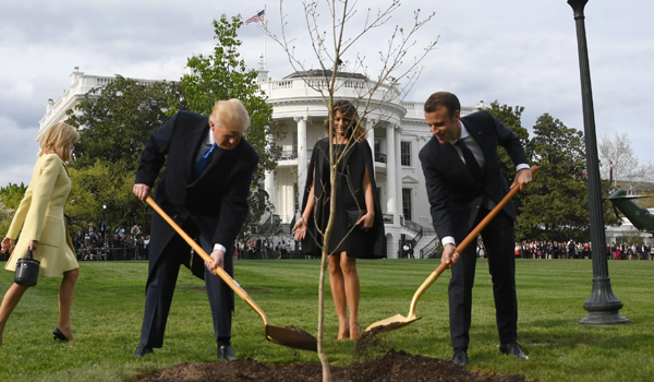 Tree planted to mark Trump-Macron friendship is dead, ending the 'charm offensive'