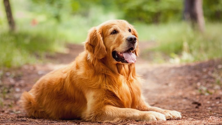 'Drug for arthritis in dogs can fight cancer in people'