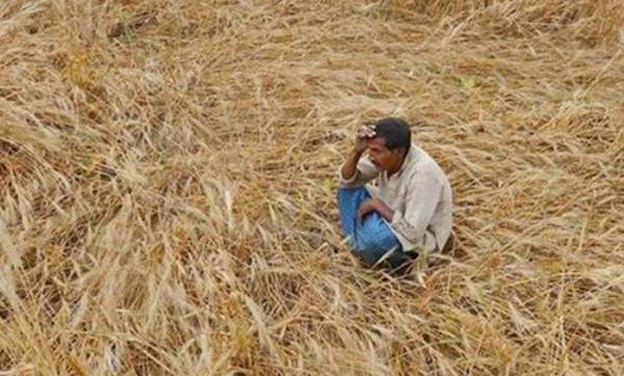 Farm distress: Over 450 farmers committed suicide in Marathwada in past six months