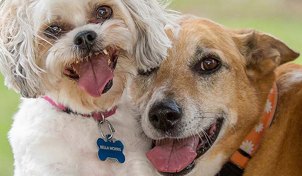 Female dog punished for illicit relationship with neighbor's dog! Incidents grow over character