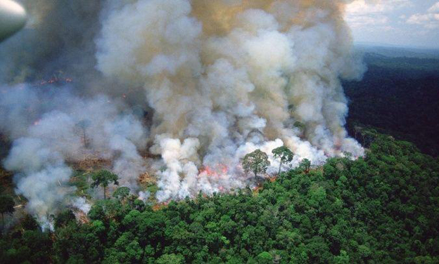 Save Amazon :Bollywood expresses concern over Amazon rainforest wildfires