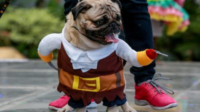 "QUEZON CITY, Oct. 28, 2019 (Xinhua) -- A dog dressed in Halloween costume is seen during the ""Petrified"" Halloween celebration in Quezon City, the Philippines, Oct. 27, 2019. Xinhua/Rouelle Umali/UNI PHOTO-3F"