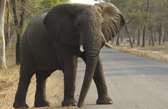 Elephant kills five in 24 hours in Assam