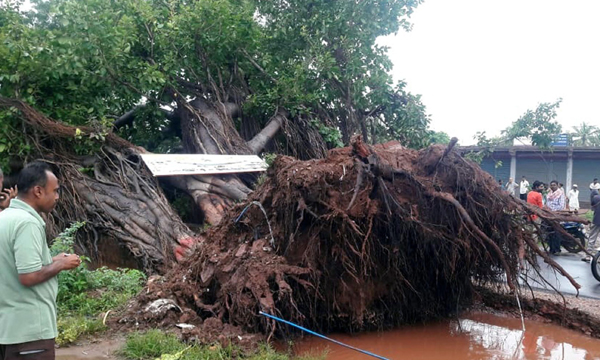 BELAGAVI, OCT 22 (UNI)- A huge old tree uprooted due to heavy rain, partially blocked Ramdurg-Belagavi Road, on Tuesday early morning. UNI PHOTO-1U