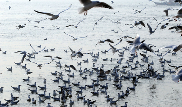 PRAYAGRAJ, NOV 18 (UNI)- Migratory birds flying over Ganga river during a foggy morning in Prayagraj on Monday. UNI PHOTO-3U