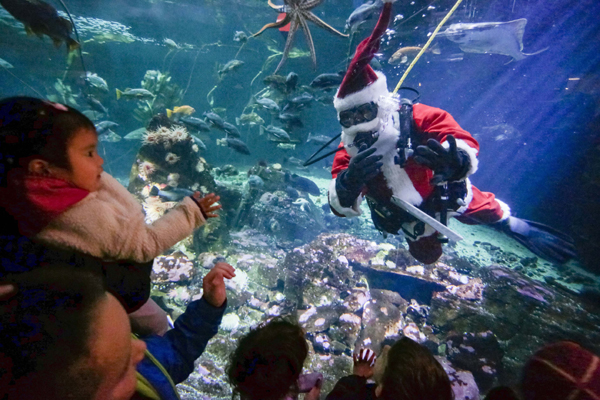 VANCOUVER, Nov. 25, 2019 (Xinhua) -- A diver dressed as Santa Claus interacts with children from a fish tank at Vancouver Aquarium in Vancouver, Canada, Nov. 24, 2019. A performer dressed as Santa Claus dived in the giant fish tank to send holiday greetings to the crowds at the event of Scuba Claus Dive in Vancouver Aquarium. Xinhua/UNI PHOTO-13F