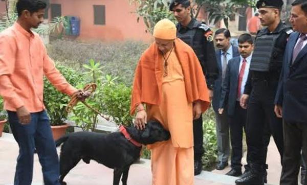 No politics! UP CM's pet now Internet celebrity