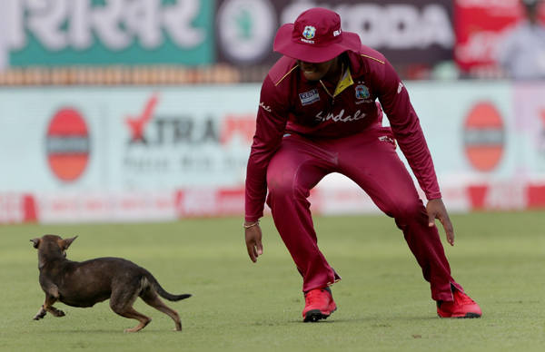 Chennai: Play was temporarily halted when a playful canine ran out to the middle during the 1st ODI match between India and West Indies at MA Chidambaram Stadium in Chennai on Dec 15, 2019. (Photo: Surjeet Yadav/IANS)