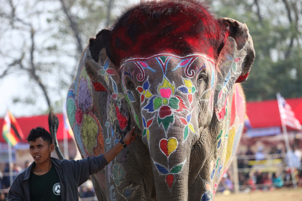 CHITWAN, Dec. 27, 2019 (Xinhua) -- A mahout shows his elephant to judges during the on-spot elephant decoration competition during the 16th Elephant Festival in Sauraha, a tourism hub in southwest Nepal's Chitwan district, Dec. 27, 2019. The annual event aims to bring humans closer with elephants, encourage wildlife protection and conservation and promote tourism in the region. This year's event is organized in promotion of the Visit Nepal Year 2020 campaign. (Photo by Sunil Sharma/Xinhua/IANS)