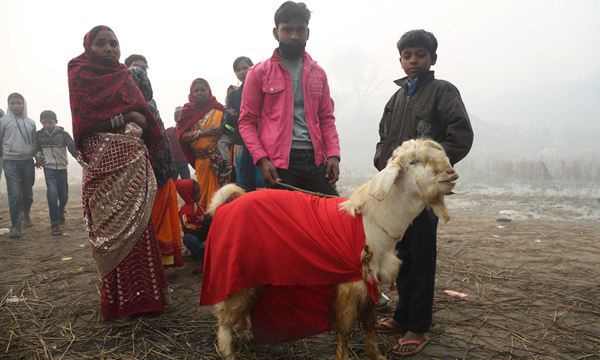 BARA, Dec. 3 (Xinhua) -- People bring a goat to the sacrificial ceremony of Gadhimai festival near a temple in Bariyapur, Bara, Nepal, Dec. 3, 2019. Hindu devotees celebrate the Gadhimai festival, which takes place once in every five years, with the blood of freshly slain animals as the ritual sacrifice to Gadhimai, the goddess of power. Xinhua/UNI PHOTO-11F
