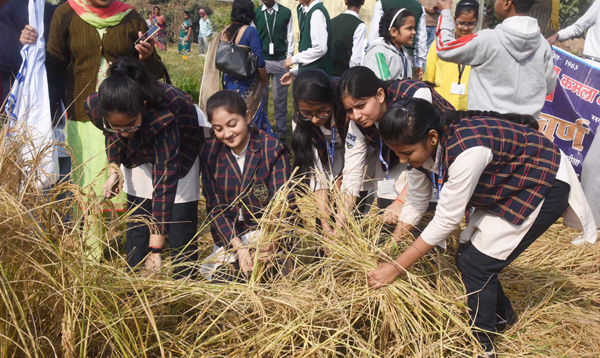 PATNA, DEC 4 (UNI):- School students cut the paddy during inaugurates the Dhan Katni Mahotsav at Tarumitra Ashram, in Patna on Wednesday. UNI PHOTO-61U