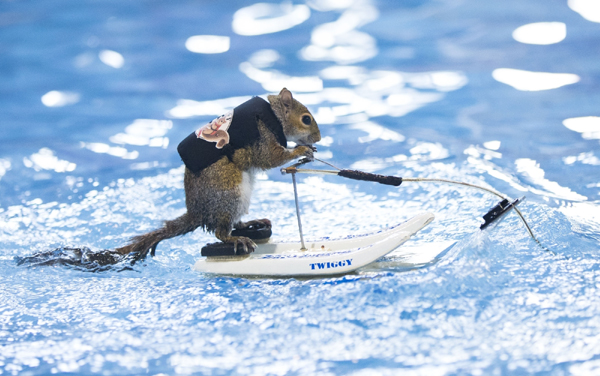 TORONTO, Jan. 18, 2020 (Xinhua) -- A squirrel performs water-skiing during the 2020 Toronto International Boat Show in Toronto, Canada, Jan. 17, 2020. (Photo by Zou Zheng/Xinhua/IANS)