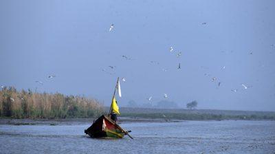 Khurda and Ganjam: A flock of migratory birds fly over the Chilika Lake in Khurda and Ganjam districts of Odisha on Jan 6, 2020. (Photo: IANS)