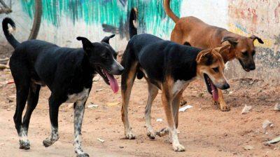 J&K to start ABC programme to check dog population