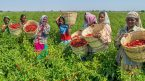 Minister urges spice farmers, exports to double efforts