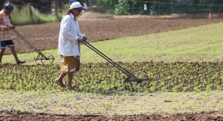 Andhra CM plans to double farmers' income