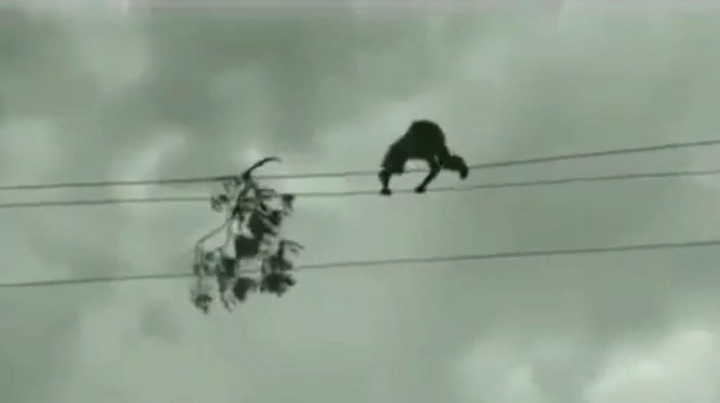 Telangana youth walks on high-tension wire to remove tree branch