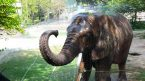 Lahore Zoo staff, animals tested for COVID-19