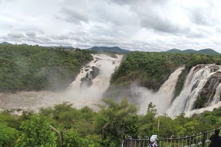 The Gaganachukki Falls at Shivanasamudra near Bengaluru overflowing due to heavy discharge of water