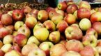 Low harvest makes Himachal apple business fruitful!