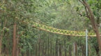 Uttarakhand has a bridge for reptiles, animals
