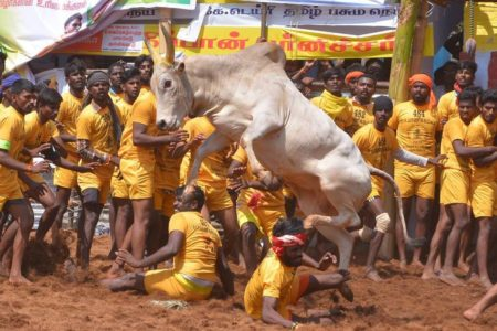 'Jallikattu', India's official entry at Oscars 2021